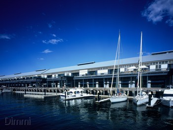 Flying Fish Pyrmont - Modern Australian cuisine - image 5 of 13.