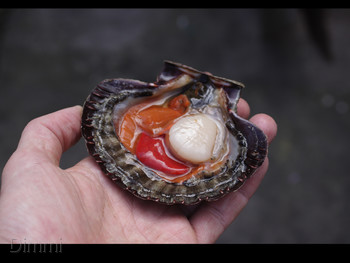 Moxhe Bronte - Seafood cuisine - image 6 of 17.